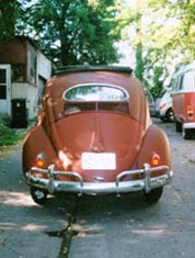 oval window beetle rear